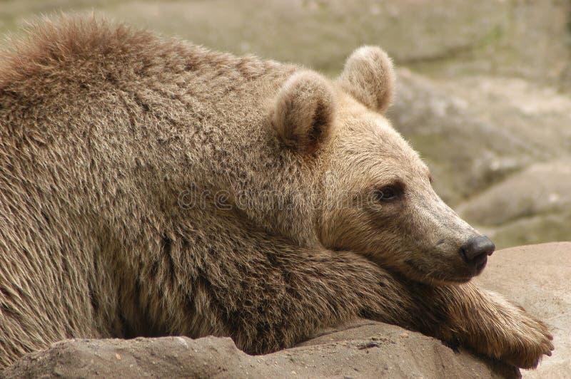 blue bear obraz stock