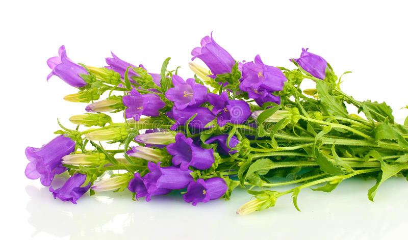 Download Blue bell flowers stock image. Image of flowers, blue - 25830523