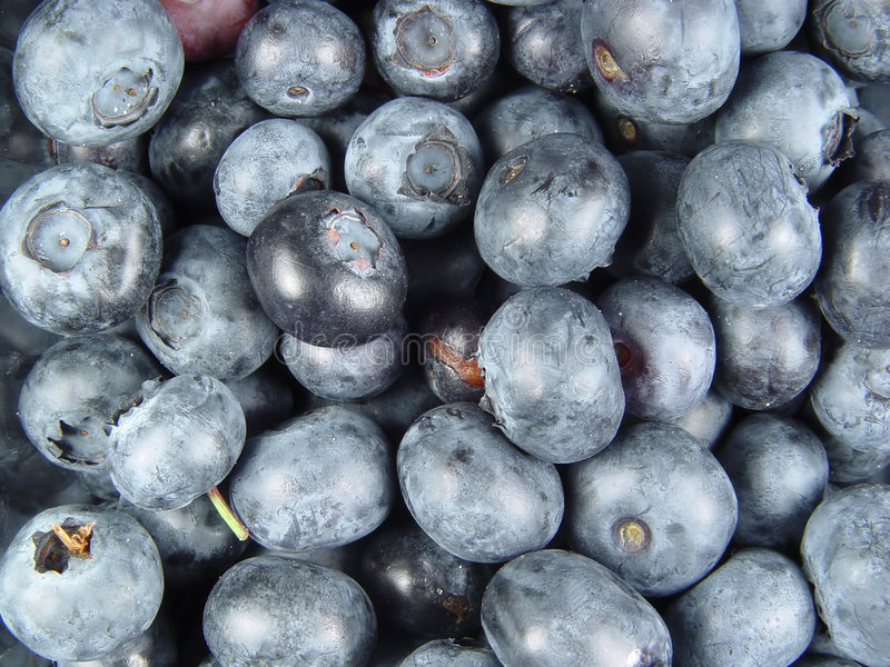 Download Blue Berries stock photo. Image of fruit, natural, nature - 9130