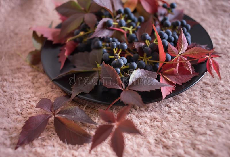 blue berries grapes red leaves black plate pink background stock photos