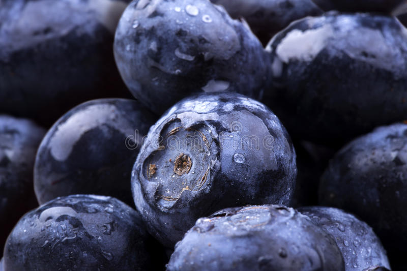 Blue berries with water drops stock photography