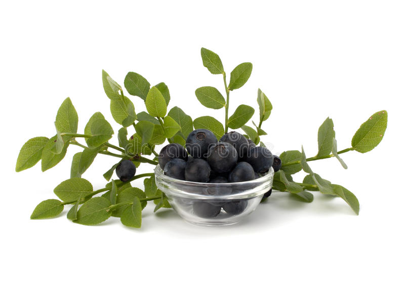 Blue Bilberry Or Whortleberry Stock Image