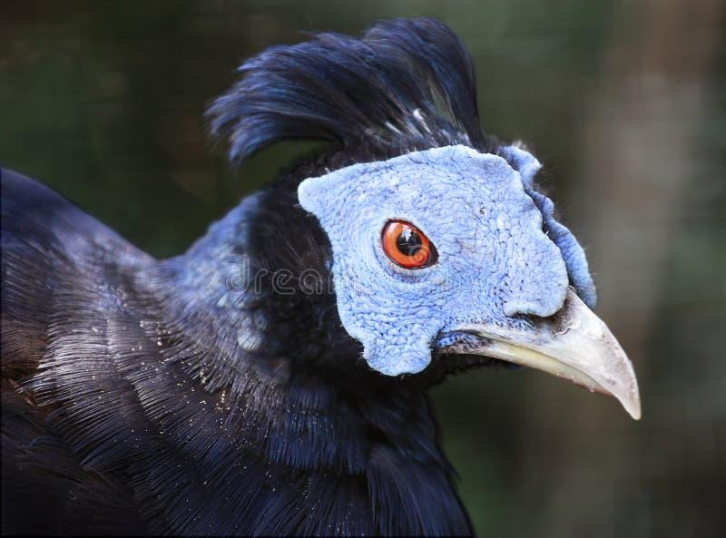 Blue Bird Stock Images