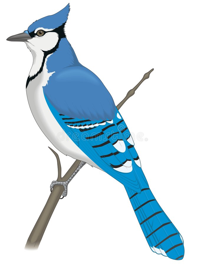 Download Blue bird stock vector. Image of bird, claw, feather, banded - 8398704