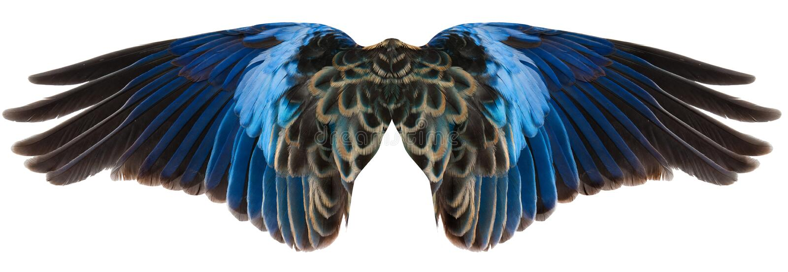 Blue Bird Wings Isolated royalty free stock image