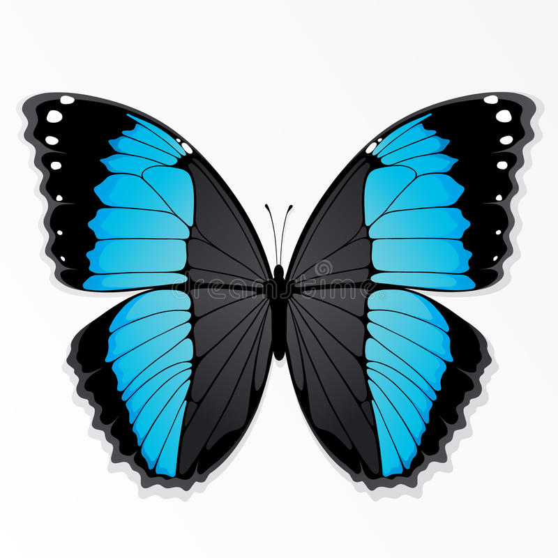 Blue and black butterfly. Illustration of a butterfly with blue and black markings, isolated on a white background vector illustration