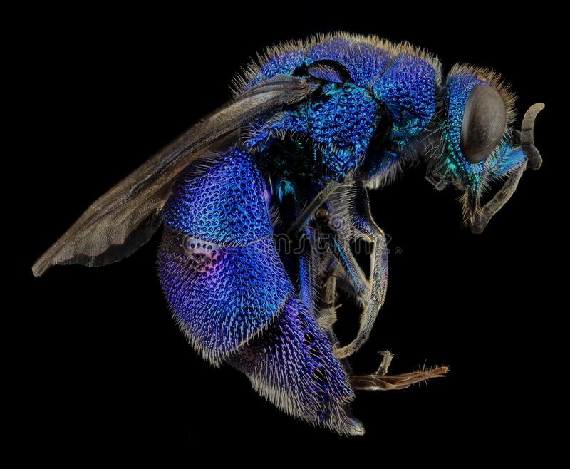 Blue and Black Flying Insects stock photography
