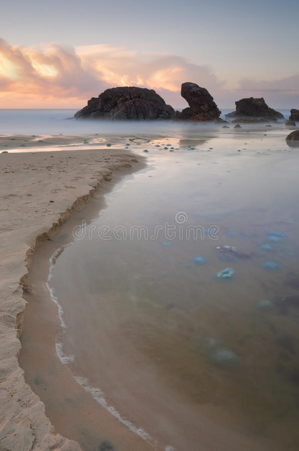 Blue Blubber jelliyfish at sunrise. Even the creek was filled with these venomous blue blubber jellyfish ranging in sizes up to 16 inches wide. The venomous royalty free stock images