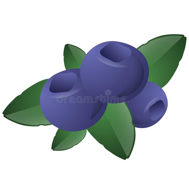 Blue blueberries with green leaves stock image