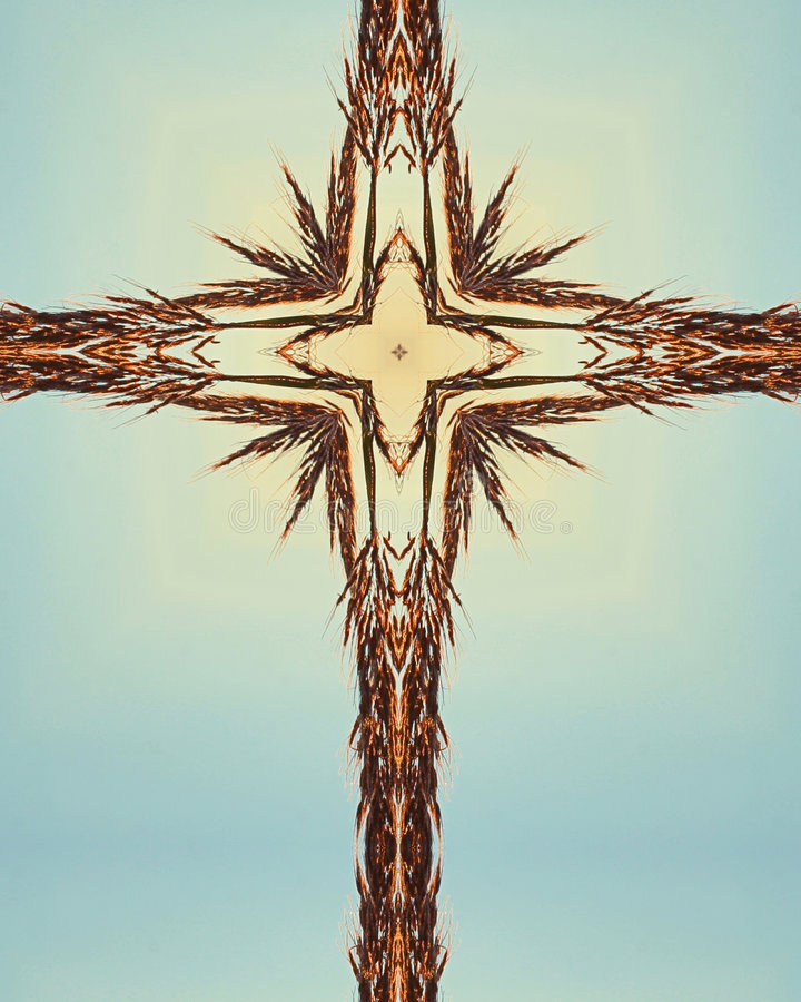 Blue Bluestem cross royalty free stock images