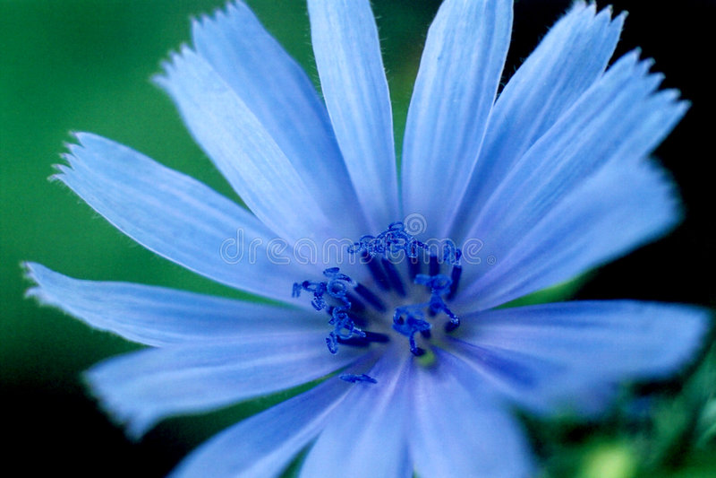 Blue Brilliance stock images