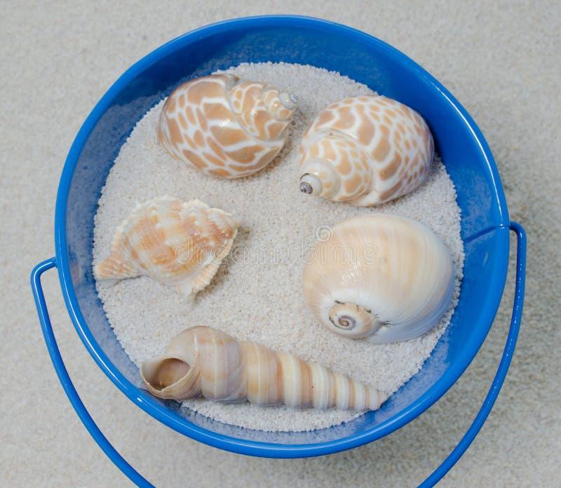 Blue Bucket and Shells stock photos