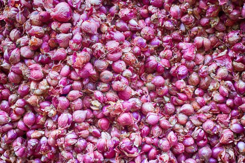 Blue bulb onion. Red onion, onion family, bulb vegetables. Onion background stock image