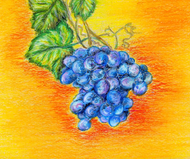 Blue bunch of grapes on a bright orange yellow background painted in pastel technique. Hand drawn vineyard for use as poster, card, postcard, scrapbooking royalty free illustration