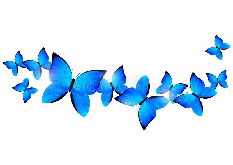 Blue butterflies border vector illustration