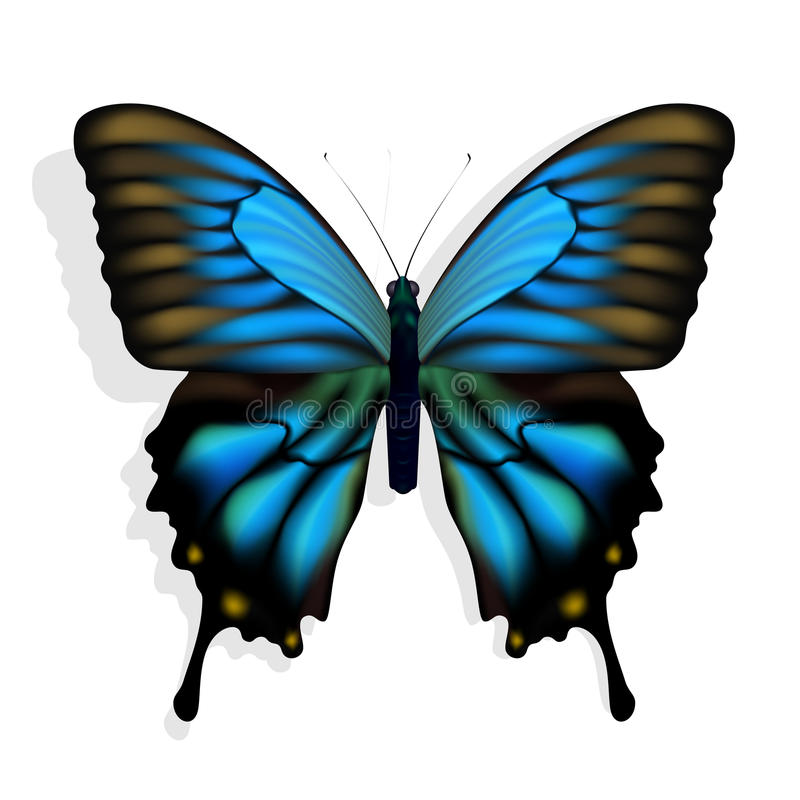 Blue butterfly stock illustration