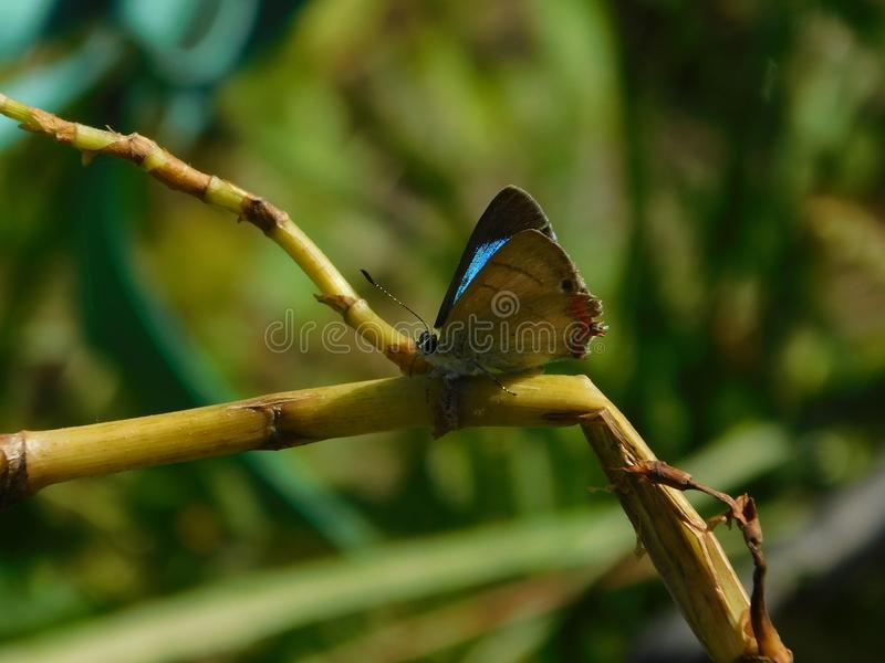 Blue Butterfly. royalty free stock photography