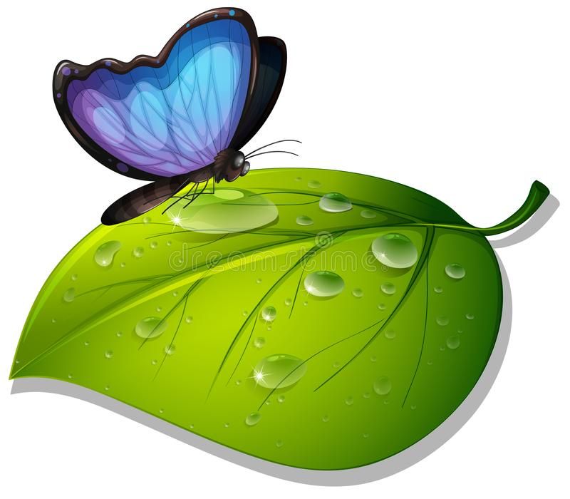 Blue butterfly on green leaf on white background stock illustration