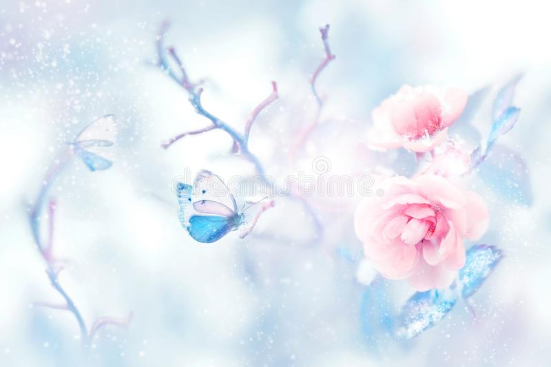 Blue butterfly in the snow on pink roses in a fairy garden. Artistic Christmas image. stock illustration