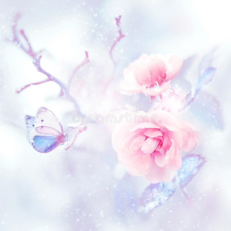 Blue butterfly in the snow on pink roses in a fairy garden. Artistic Christmas image. Delicate gentle pink and blue tone vector illustration