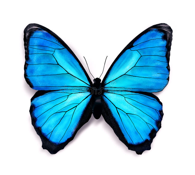 Download Blue butterfly stock illustration. Illustration of copy - 32275746