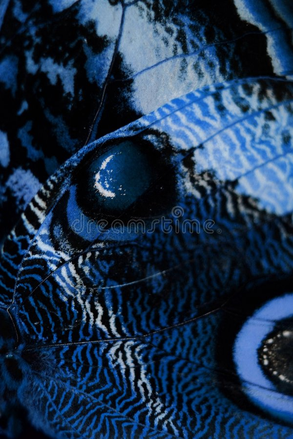 Blue butterfly wing royalty free stock photography