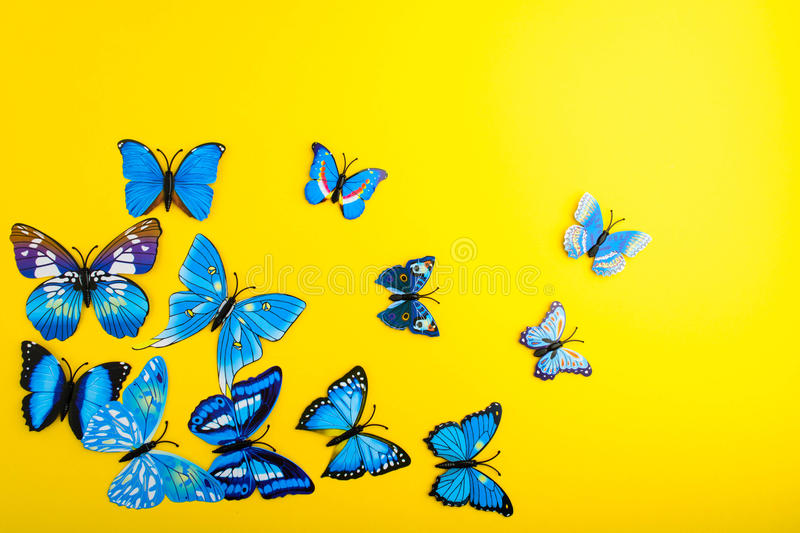 Blue butterfly on yellow background stock photo