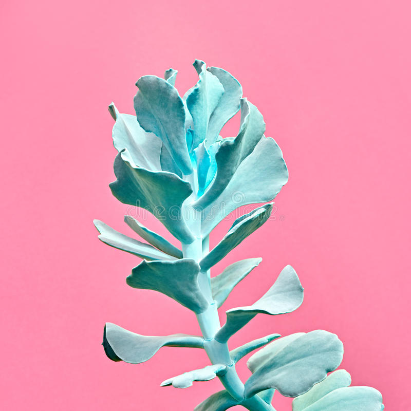 Blue Cactus. Art Gallery Fashion Design. Minimal. Aloe. Art Gallery Fashion Design. Minimal. Blue aloe. Trendy Pastel Colors. Creative Style. Fashion Concept on royalty free stock photos