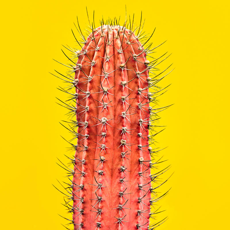 Blue Cactus. Art Gallery Fashion Design. Minimal. Cactus. Art Gallery Fashion Design. Minimal. Pink cactus, Trendy Colors. Creative Style. Fashion Concept on stock images