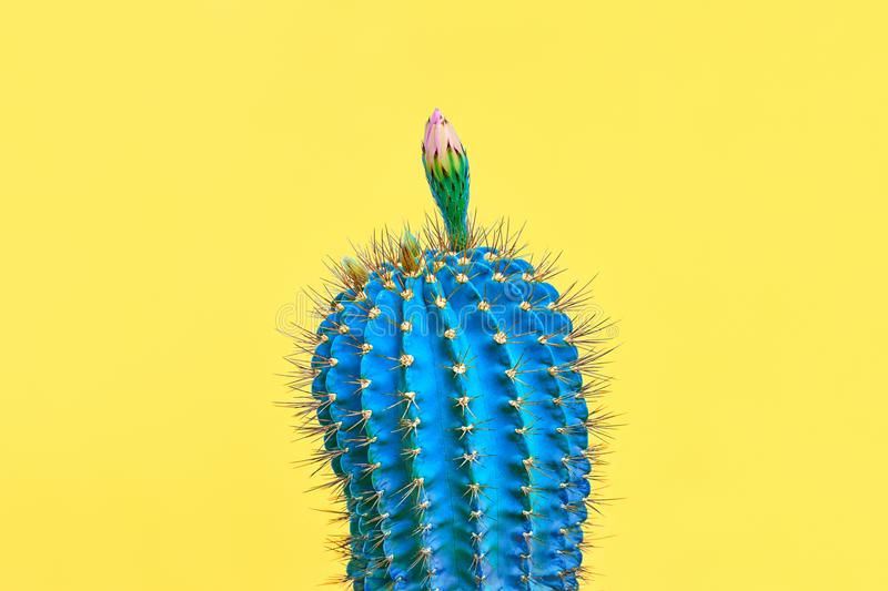 Blue Cactus with flower. Minimal Fashion. Art. Blue Cactus. Fashion Design. Minimal Stillife. Trendy tropical print on Yellow. Surrealism. Pop Art stock photos