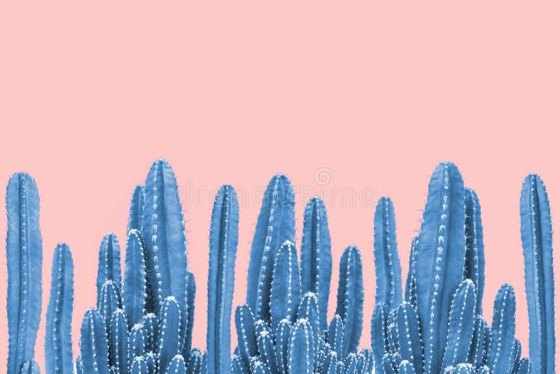Blue cactus on pink background. Minimal stillife. Creative unusual stock photography