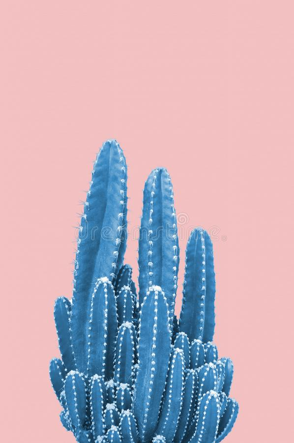 Blue cactus on pink background. Minimal stillife. Creative unusual stock image
