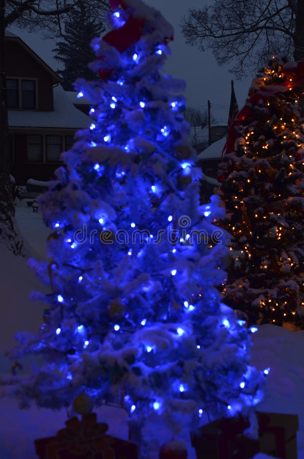 Download Blue Christmas Tree Night Lights Snow On Ground Stock Photo    Image Of Outdoors,