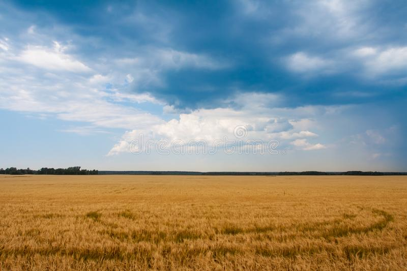 Blue clouds hung over the yellow field. royalty free stock photos