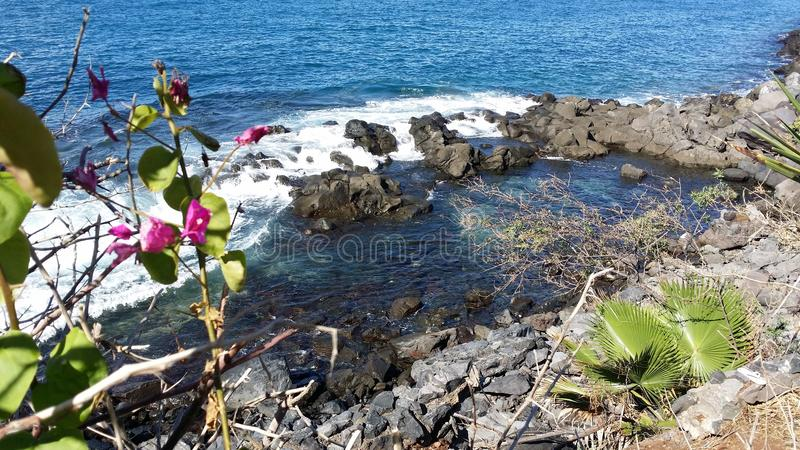 Blue Coast at Tenerife, Adeje. Spain. Puerto Santigo, Flowers and blue coast at Tenerife, Adeje. Good place to relax royalty free stock photography