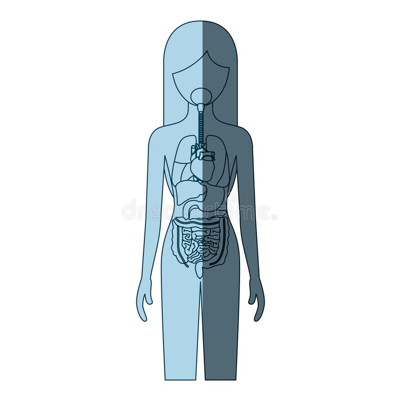 Blue color shading silhouette female person with internal organs system of human body. Vector illustration vector illustration
