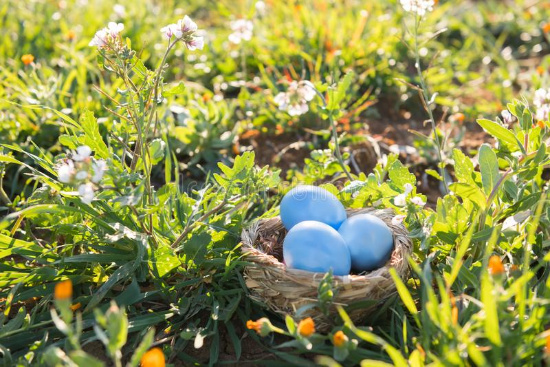 Painted Easter eggs in the nest hidden on the grass, natural spring`s field royalty free stock photo