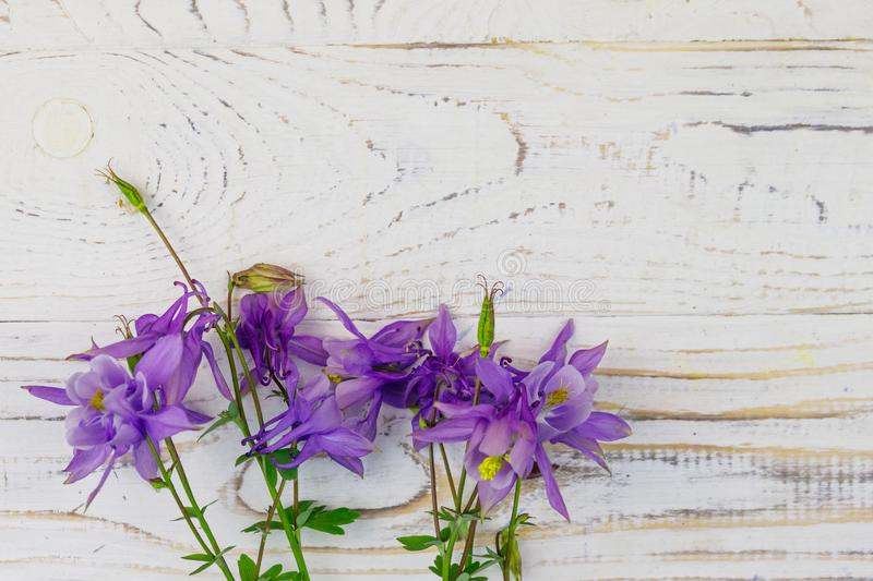 Blue columbine flowers on a white wooden background. Top view, copy space stock photography