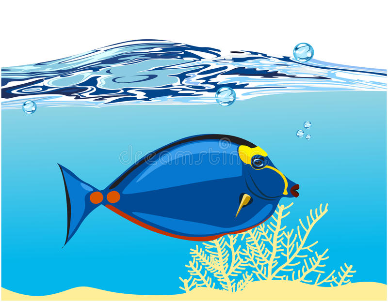 Download Blue coral fish stock illustration. Image of tail, blue - 23224475