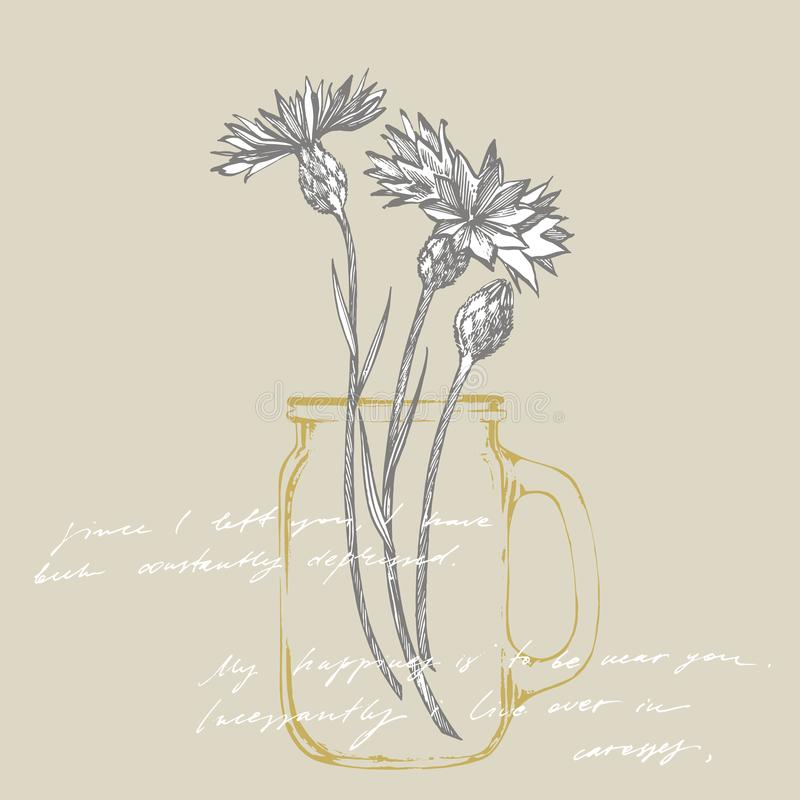 Blue Cornflower Herb or bachelor button flower bouquet isolated on white background. Set of drawing cornflowers, floral. Elements, hand drawn botanical royalty free illustration