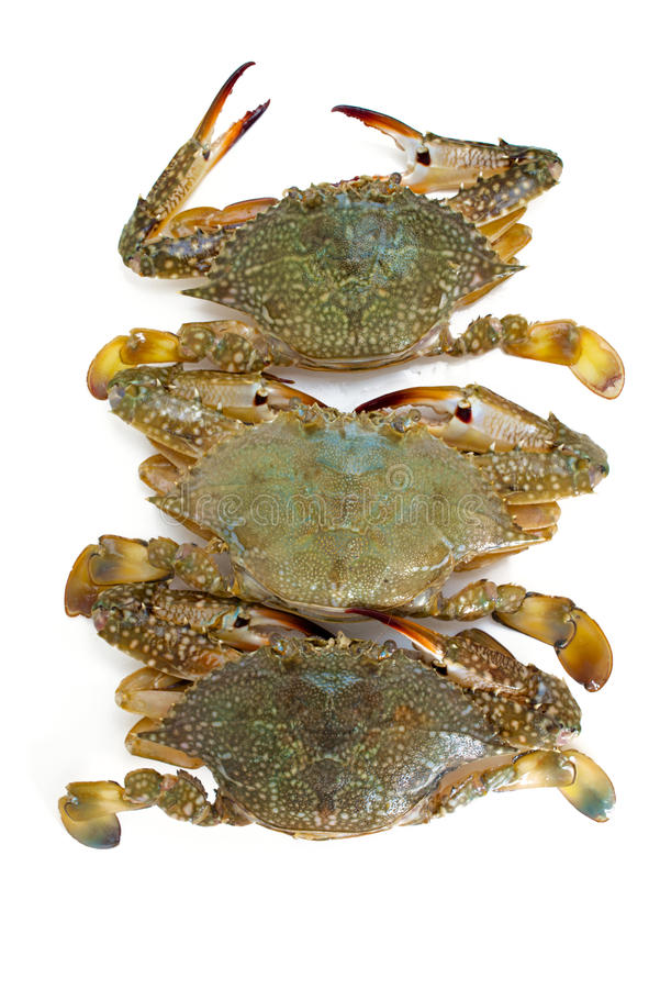 Download Blue crab stock image. Image of prepared, claw, blue - 37688615