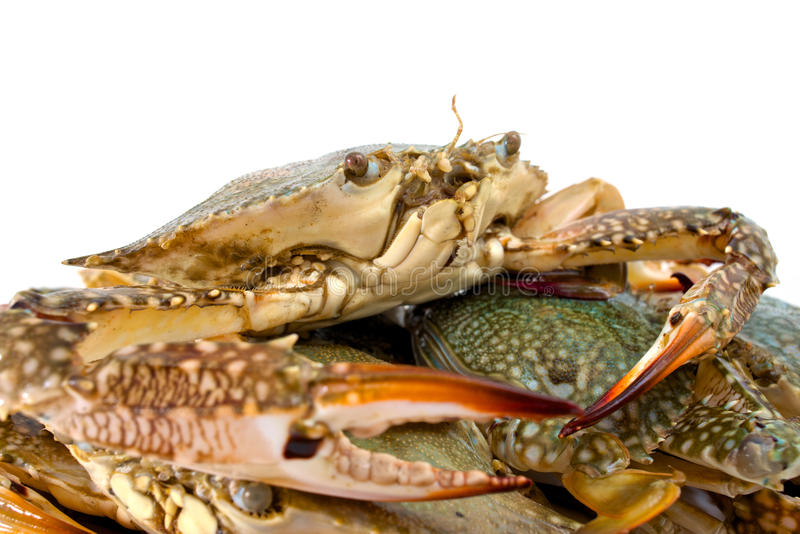 Download Blue crab stock image. Image of isolated, aggression - 37688777