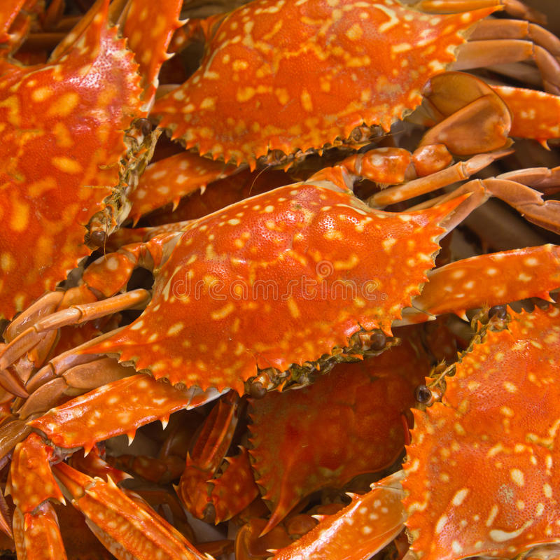Blue crab boiled stock photo