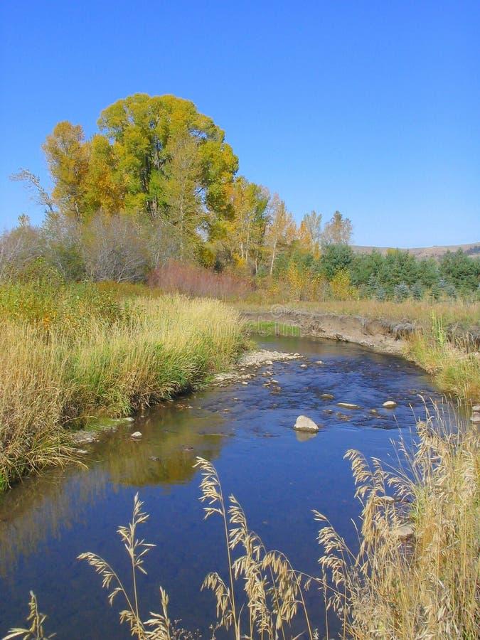 Blue Creek royalty free stock photos