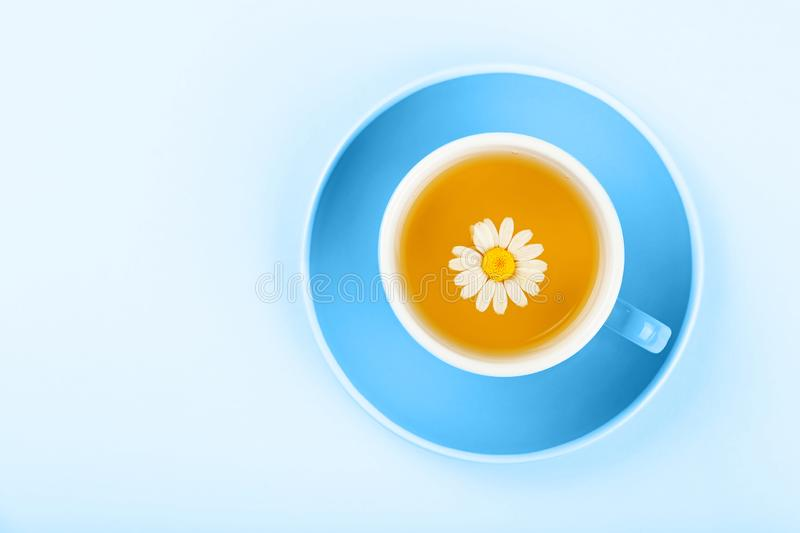 Blue cup of herbal tea with camomile royalty free stock images