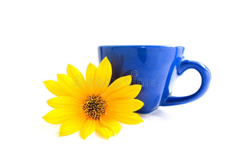 Blue cup and yellow flower heliopsis. Isolated on white background. Pollen on flower petals. Bright colors. Blue cup and yellow flower heliopsis. Isolated on royalty free stock photography