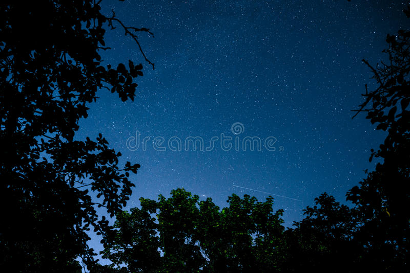 Blue dark night sky with many stars above field of trees. Milkyway cosmos background royalty free stock image