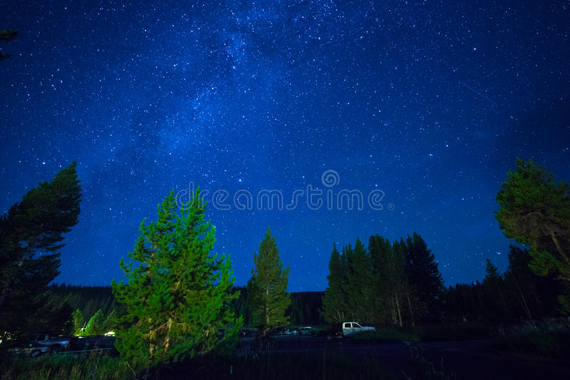 Blue dark night sky with stars above field of trees. royalty free stock image
