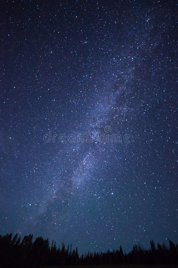 Blue dark night sky with stars above field of trees. royalty free stock photography