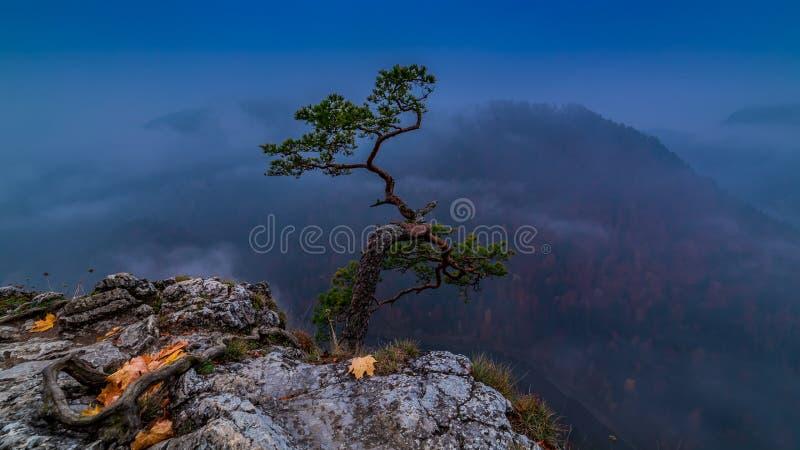 Blue dawn at Sokolica peak in Pieniny mountains, Poland. Europe royalty free stock photography